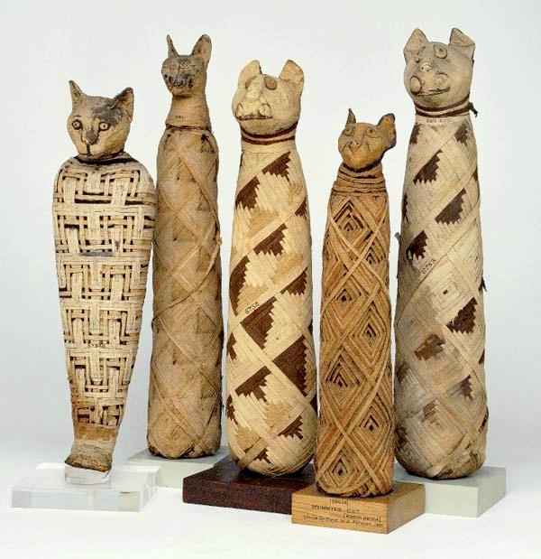 3. Diverses momies de chats british museum.