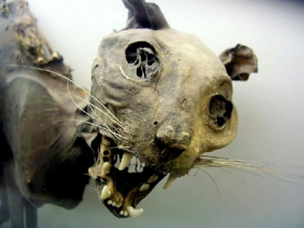 4. Chat dépoque égyptienne bien conservé