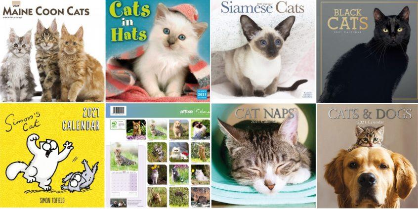 calendriers de chat