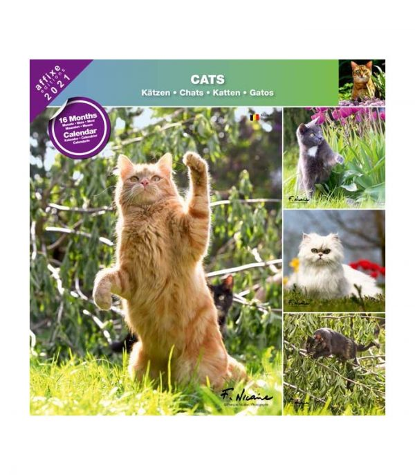 chats 2021 calendrier affixe