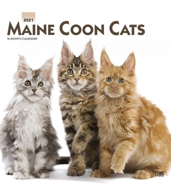 maine coon 2021 1