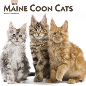 maine coon 2021