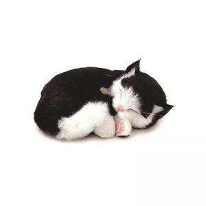 peluche perfect petzzzz chat europeen noir et blanc