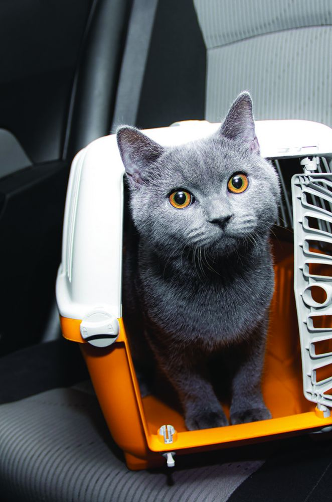 Emmener son chat en vacances